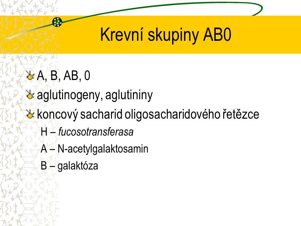Krevní skupiny AB0 A, B, AB, 0 aglutinogeny, aglutininy koncový sacharid oligosacharidového řetězce H – fucosotransferasa A – N-acetylgalaktosamin B –