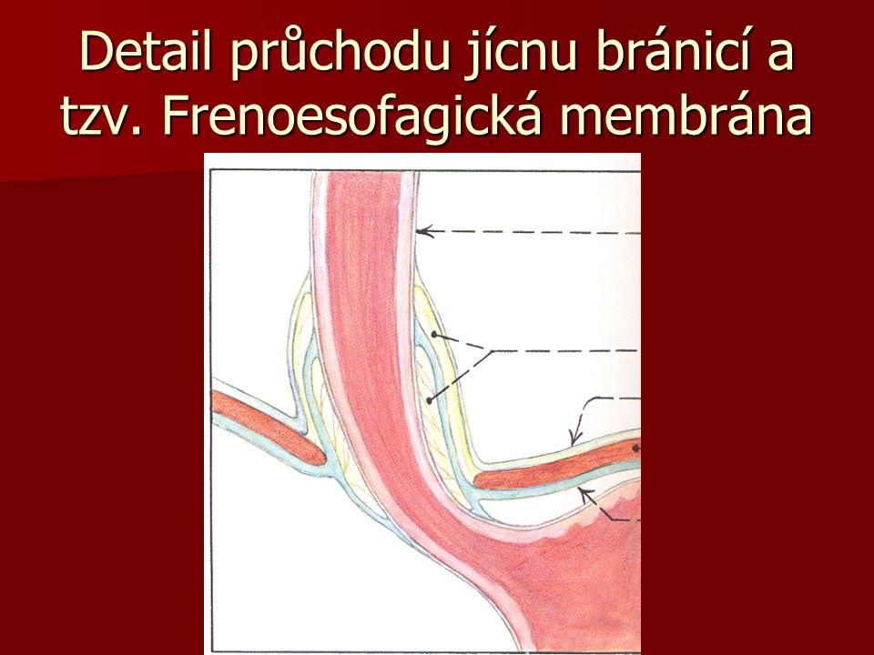 Detail průchodu jícnu bránicí a tzv. Frenoesofagická membrána