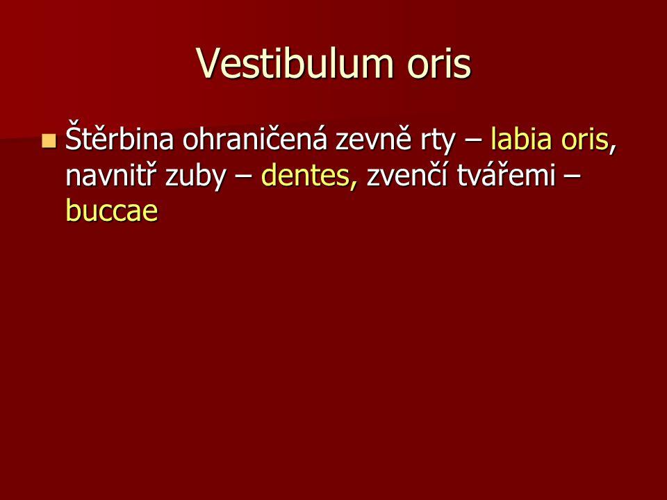 Cavitas oris propria Dentes – zuby dočasné (mléčné) 20 zubů, dvě stoličky, dva řezáky, špičák Dentes – zuby dočasné (mléčné) 20 zubů, dvě stoličky, dva řezáky, špičák - zuby trvalé 32 zubů, tři stoličky, dva zuby třenové, špičák, dva řezáky - zuby trvalé 32 zubů, tři stoličky, dva zuby třenové, špičák, dva řezáky Lingua – radix linguae, corpus linguae, apex linguae Lingua – radix linguae, corpus linguae, apex linguae - je to útvar, který je pokrytý sliznicí (papillae linguales – podle tvaru:filiformes, conicae, fungiformes, foliatae, vallatae), obsahuje chuťové poháry – caliculi gustatorii, pomocí svých svalů je spojen s okolým - je to útvar, který je pokrytý sliznicí (papillae linguales – podle tvaru:filiformes, conicae, fungiformes, foliatae, vallatae), obsahuje chuťové poháry – caliculi gustatorii, pomocí svých svalů je spojen s okolým Palatum, patro Palatum, patro Tonsilla palatina Tonsilla palatina Glandulae oris Glandulae oris