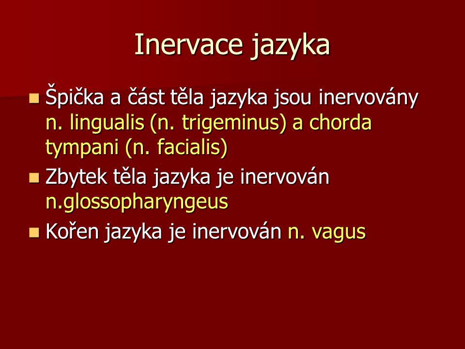 Inervace jazyka Špička a část těla jazyka jsou inervovány n. lingualis (n. trigeminus) a chorda tympani (n. facialis) Špička a část těla jazyka jsou i