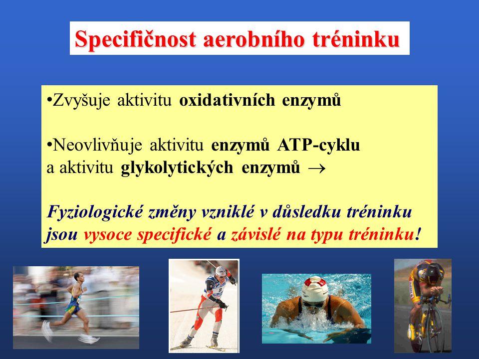 Specifičnost aerobního tréninku Zvyšuje aktivitu oxidativních enzymů Neovlivňuje aktivitu enzymů ATP-cyklu a aktivitu glykolytických enzymů  Fyziolog