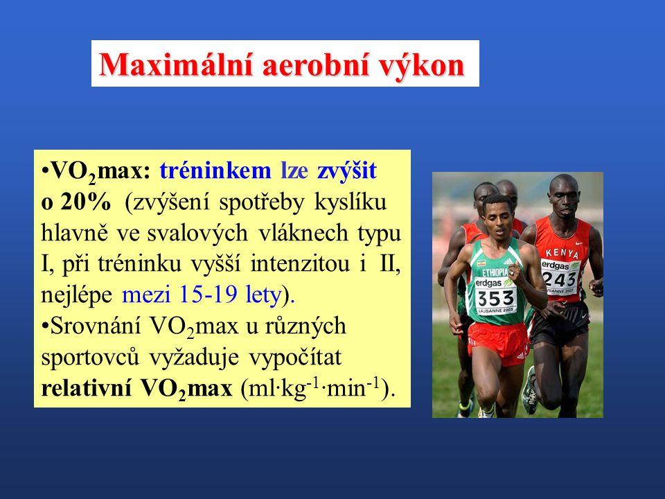 VO 2 max: tréninkem lze zvýšit o 20% (zvýšení spotřeby kyslíku hlavně ve svalových vláknech typu I, při tréninku vyšší intenzitou i II, nejlépe mezi 1