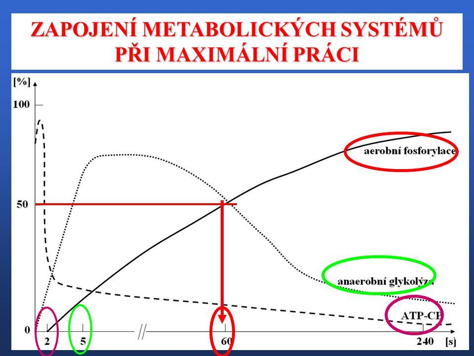 ANAEROBNÍ ZISK – ATP GLYKOGEN A GLUKÓZA ATP + LAKTÁT ATP + LAKTÁT 300 – 500 g Pyruvát Pyruvát 3 ATP 2 ATP : RYCHLÁ, ale NEHOSPODÁRNÁ cesta k získání ATP