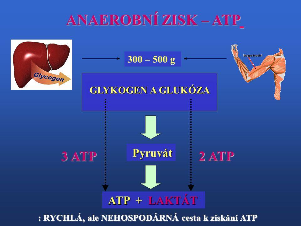 ANAEROBNÍ ZISK – ATP GLYKOGEN A GLUKÓZA ATP + LAKTÁT ATP + LAKTÁT 300 – 500 g Pyruvát Pyruvát 3 ATP 2 ATP : RYCHLÁ, ale NEHOSPODÁRNÁ cesta k získání A
