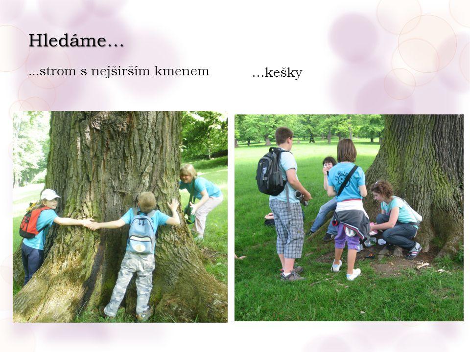 Hledáme… … strom s nejširším kmenem …kešky