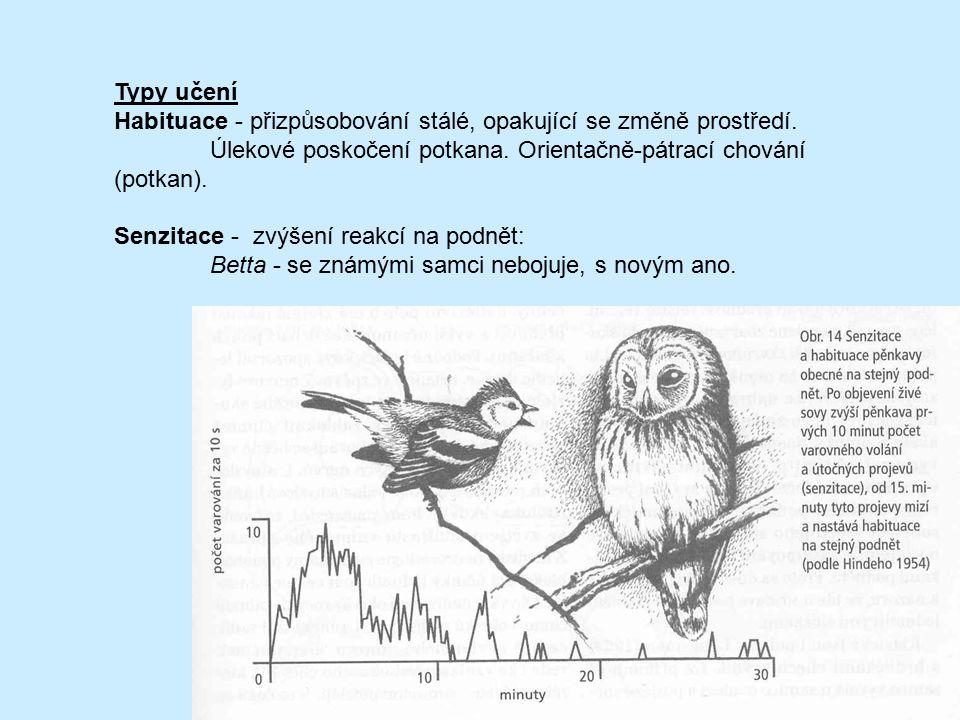 Typy učení Habituace - přizpůsobování stálé, opakující se změně prostředí. Úlekové poskočení potkana. Orientačně-pátrací chování (potkan). Senzitace -