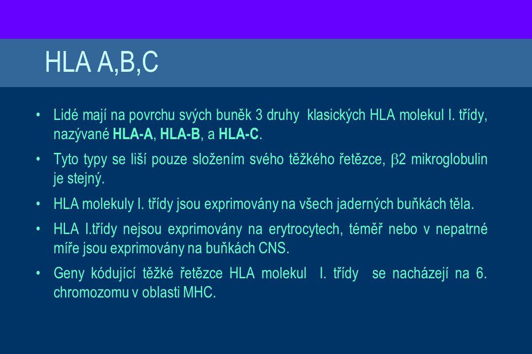 HLA A,B,C Lidé mají na povrchu svých buněk 3 druhy klasických HLA molekul I. třídy, nazývané HLA-A, HLA-B, a HLA-C. Tyto typy se liší pouze složením s