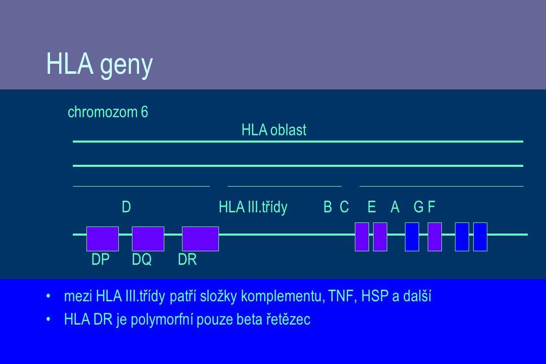 HLA geny mezi HLA III.třídy patří složky komplementu, TNF, HSP a další HLA DR je polymorfní pouze beta řetězec HLA oblast DHLA III.třídy B C E A G F DP DQ DR chromozom 6