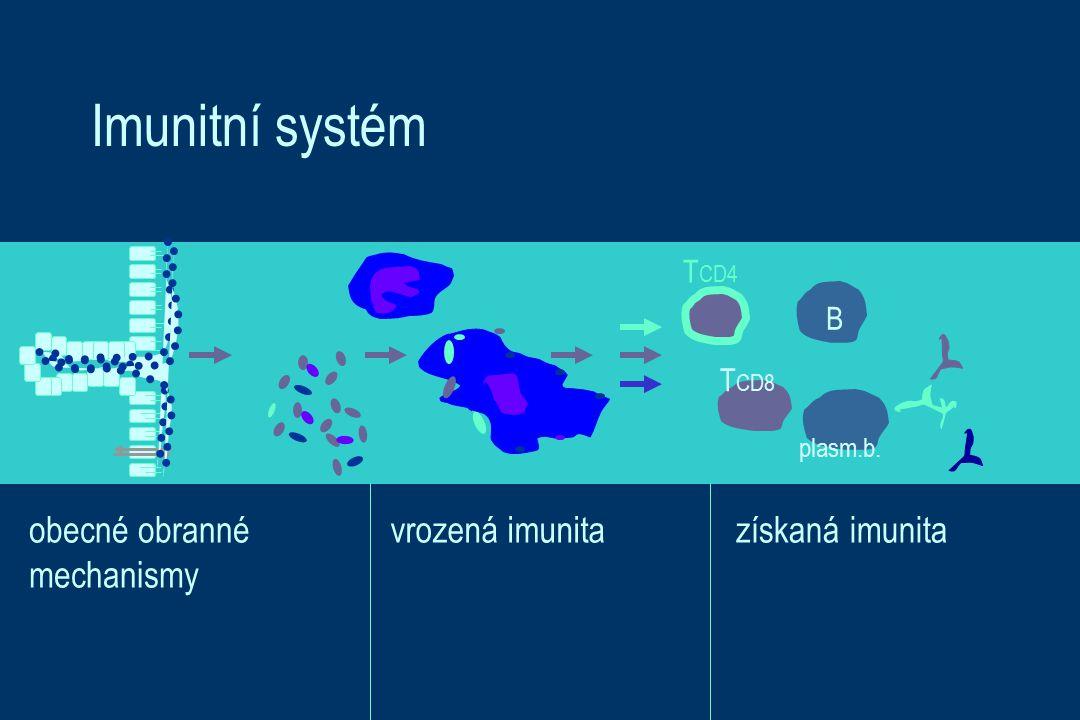 Imunitní systém B T CD4 plasm.b. T CD8 obecné obranné mechanismy vrozená imunitazískaná imunita