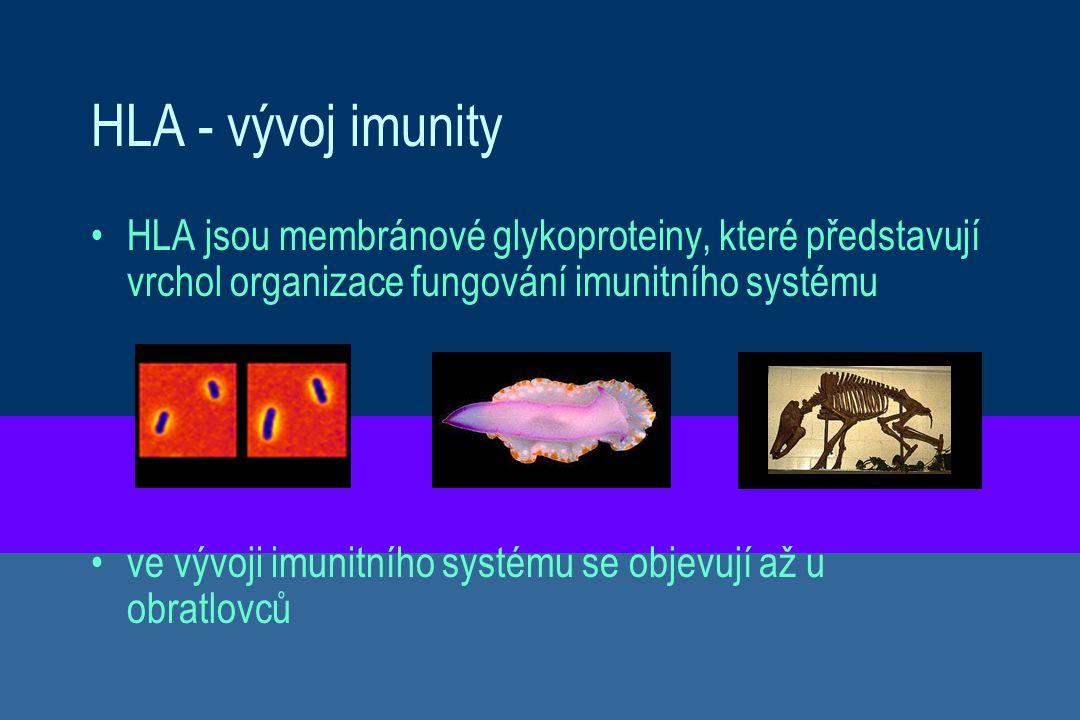 HLA - vývoj imunity HLA jsou membránové glykoproteiny, které představují vrchol organizace fungování imunitního systému ve vývoji imunitního systému s