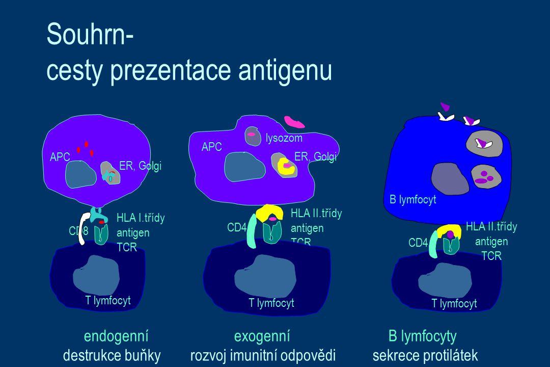 Souhrn- cesty prezentace antigenu CD4 T lymfocyt B lymfocyt HLA I.třídy antigen TCR CD8 T lymfocyt APC ER, Golgi HLA II.třídy antigen TCR CD4 T lymfocyt APC lysozom ER, Golgi HLA II.třídy antigen TCR endogenní exogenní B lymfocyty destrukce buňky rozvoj imunitní odpovědi sekrece protilátek