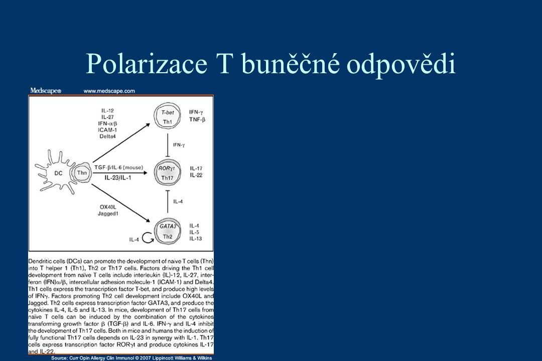 Polarizace T buněčné odpovědi