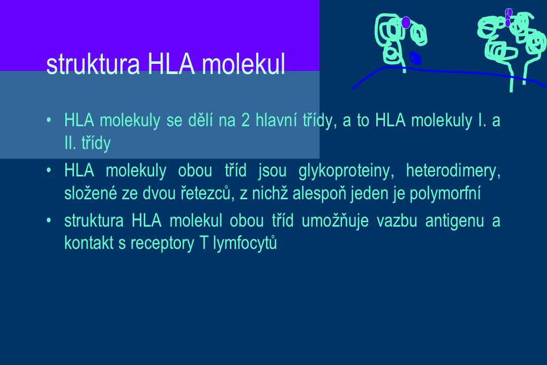 struktura HLA molekul HLA molekuly se dělí na 2 hlavní třídy, a to HLA molekuly I. a II. třídy HLA molekuly obou tříd jsou glykoproteiny, heterodimery