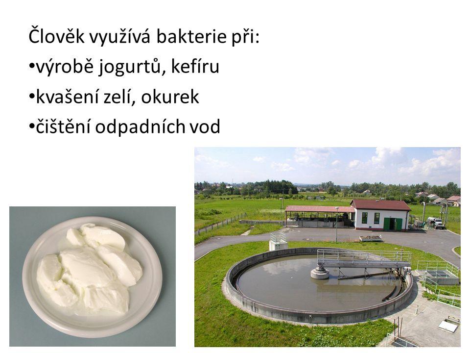 Člověk využívá bakterie při: výrobě jogurtů, kefíru kvašení zelí, okurek čištění odpadních vod
