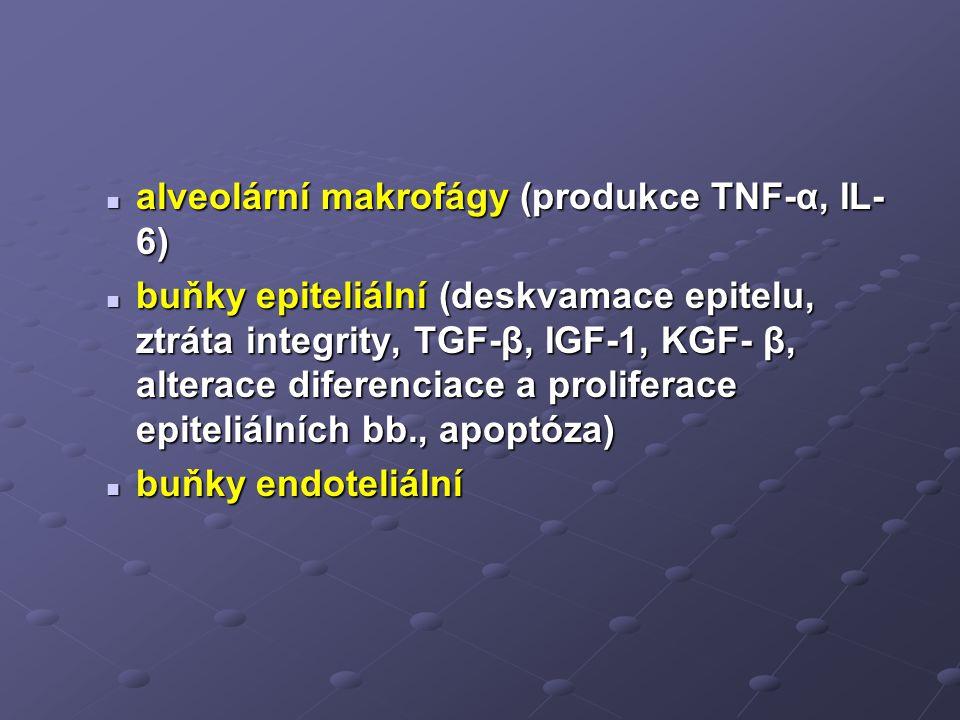 alveolární makrofágy (produkce TNF-α, IL- 6) alveolární makrofágy (produkce TNF-α, IL- 6) buňky epiteliální (deskvamace epitelu, ztráta integrity, TGF-β, IGF-1, KGF- β, alterace diferenciace a proliferace epiteliálních bb., apoptóza) buňky epiteliální (deskvamace epitelu, ztráta integrity, TGF-β, IGF-1, KGF- β, alterace diferenciace a proliferace epiteliálních bb., apoptóza) buňky endoteliální buňky endoteliální