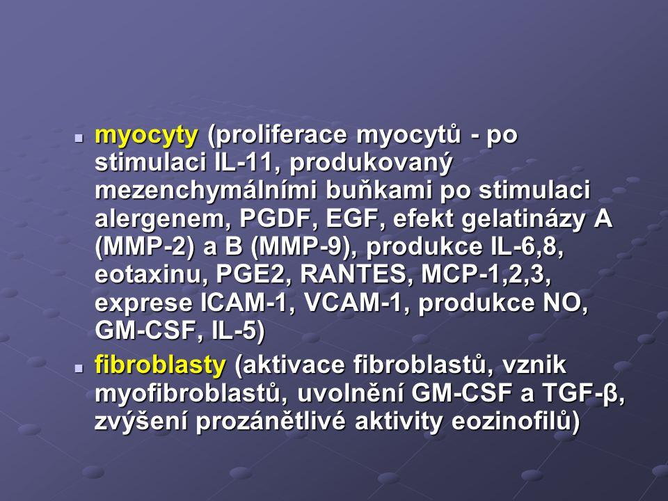 myocyty (proliferace myocytů - po stimulaci IL-11, produkovaný mezenchymálními buňkami po stimulaci alergenem, PGDF, EGF, efekt gelatinázy A (MMP-2) a B (MMP-9), produkce IL-6,8, eotaxinu, PGE2, RANTES, MCP-1,2,3, exprese ICAM-1, VCAM-1, produkce NO, GM-CSF, IL-5) myocyty (proliferace myocytů - po stimulaci IL-11, produkovaný mezenchymálními buňkami po stimulaci alergenem, PGDF, EGF, efekt gelatinázy A (MMP-2) a B (MMP-9), produkce IL-6,8, eotaxinu, PGE2, RANTES, MCP-1,2,3, exprese ICAM-1, VCAM-1, produkce NO, GM-CSF, IL-5) fibroblasty (aktivace fibroblastů, vznik myofibroblastů, uvolnění GM-CSF a TGF-β, zvýšení prozánětlivé aktivity eozinofilů) fibroblasty (aktivace fibroblastů, vznik myofibroblastů, uvolnění GM-CSF a TGF-β, zvýšení prozánětlivé aktivity eozinofilů)