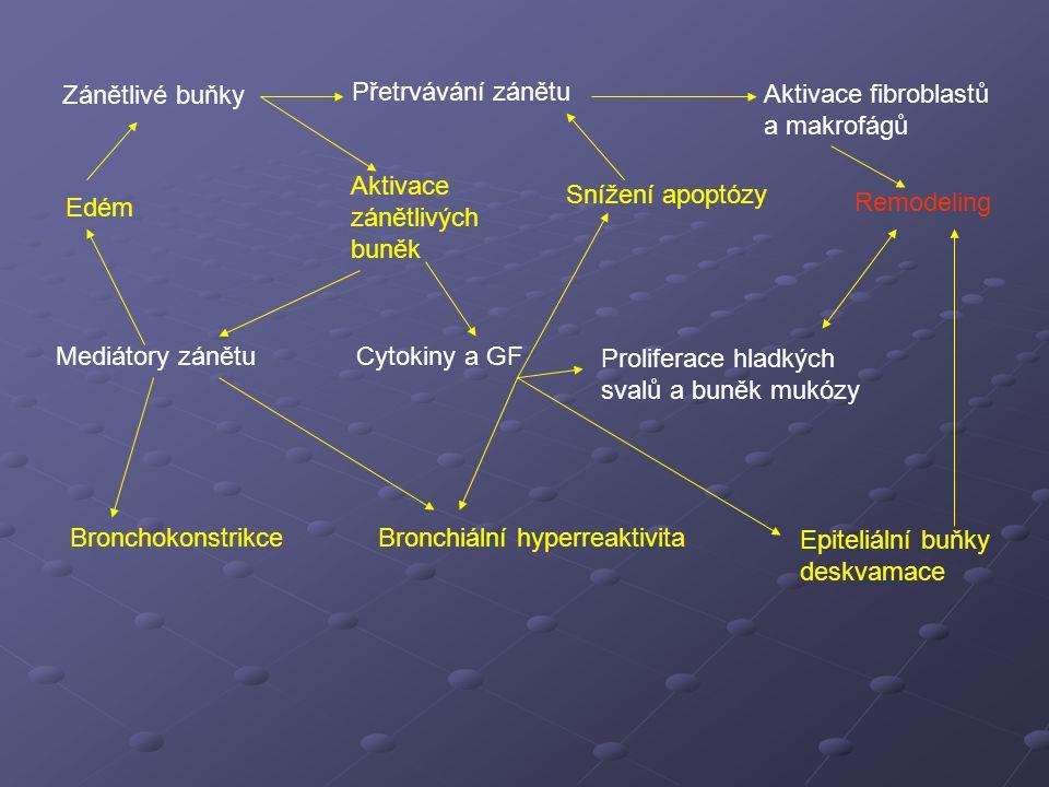 Zánětlivé buňky Přetrvávání zánětu Aktivace fibroblastů a makrofágů Edém Aktivace zánětlivých buněk Snížení apoptózy Remodeling Mediátory zánětuCytokiny a GF Proliferace hladkých svalů a buněk mukózy BronchokonstrikceBronchiální hyperreaktivita Epiteliální buňky deskvamace