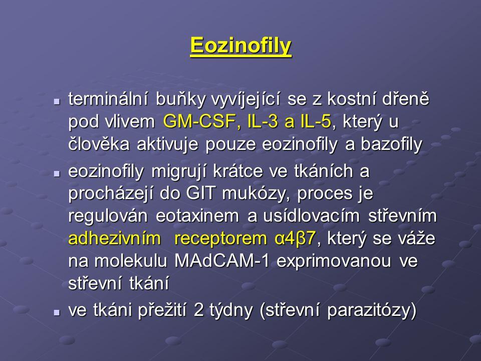 Eozinofily terminální buňky vyvíjející se z kostní dřeně pod vlivem GM-CSF, IL-3 a IL-5, který u člověka aktivuje pouze eozinofily a bazofily terminální buňky vyvíjející se z kostní dřeně pod vlivem GM-CSF, IL-3 a IL-5, který u člověka aktivuje pouze eozinofily a bazofily eozinofily migrují krátce ve tkáních a procházejí do GIT mukózy, proces je regulován eotaxinem a usídlovacím střevním adhezivním receptorem α4β7, který se váže na molekulu MAdCAM-1 exprimovanou ve střevní tkání eozinofily migrují krátce ve tkáních a procházejí do GIT mukózy, proces je regulován eotaxinem a usídlovacím střevním adhezivním receptorem α4β7, který se váže na molekulu MAdCAM-1 exprimovanou ve střevní tkání ve tkáni přežití 2 týdny (střevní parazitózy) ve tkáni přežití 2 týdny (střevní parazitózy)