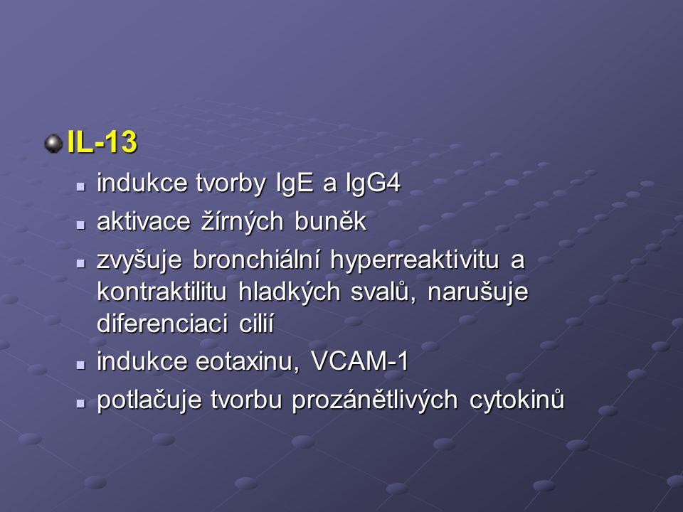 IL-13 indukce tvorby IgE a IgG4 indukce tvorby IgE a IgG4 aktivace žírných buněk aktivace žírných buněk zvyšuje bronchiální hyperreaktivitu a kontraktilitu hladkých svalů, narušuje diferenciaci cilií zvyšuje bronchiální hyperreaktivitu a kontraktilitu hladkých svalů, narušuje diferenciaci cilií indukce eotaxinu, VCAM-1 indukce eotaxinu, VCAM-1 potlačuje tvorbu prozánětlivých cytokinů potlačuje tvorbu prozánětlivých cytokinů
