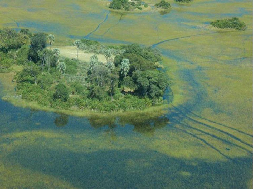 Delta řeky Okavango z vesmíru