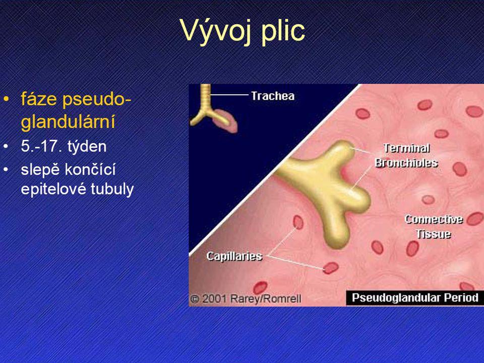 Vývoj plic I. vrůstání do splanchnického mezodermu a vyklenování do pleuroperitoneáního kanálu pseudoglandulární stadium 5.-17. týden slepě končící ep