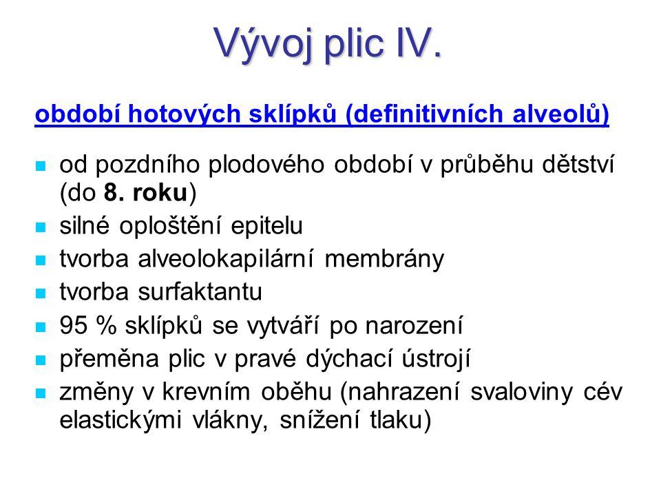 Vývoj plic IV. období hotových sklípků (definitivních alveolů) od pozdního plodového období v průběhu dětství (do 8. roku) silné oploštění epitelu tvo