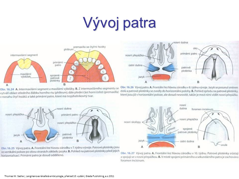 Vývoj patra Thomas W. Sadler, Langmanova lékařská embryologie, překlad 10. vydání, Grada Publishing, a.s.2011