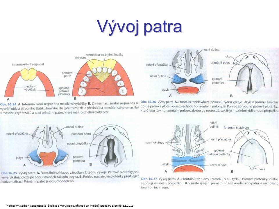123456 123456 Ductus alveolaris Primární přepážka Saccus alveolaris Pneumocyt 1.