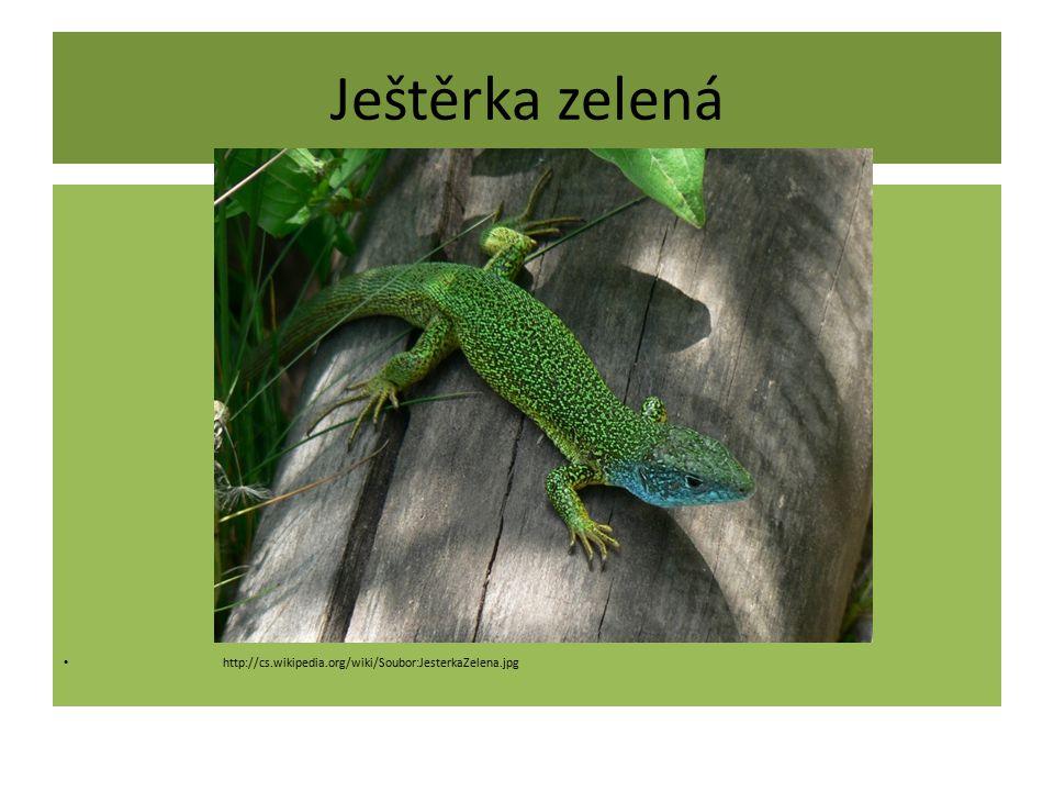 Ještěrka živorodá http://cs.wikipedia.org/wiki/Soubor:Lacerta_vivipara_2_hen_(Marek_Szczepanek).jpg
