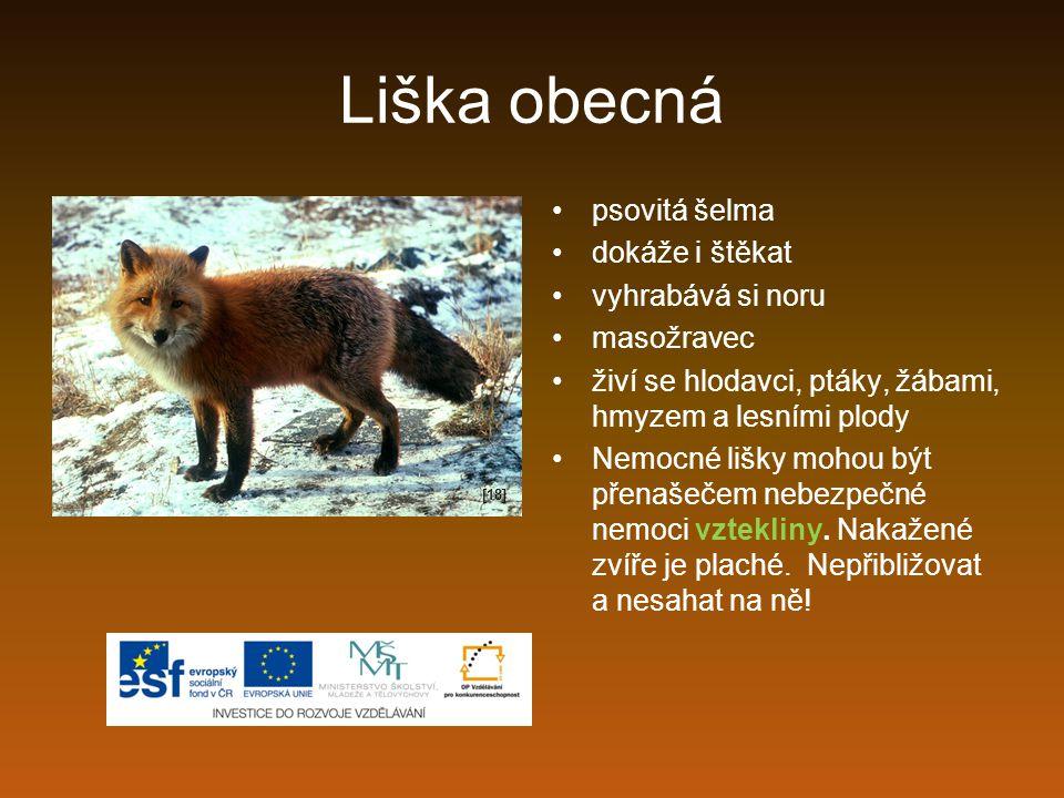 Liška obecná psovitá šelma dokáže i štěkat vyhrabává si noru masožravec živí se hlodavci, ptáky, žábami, hmyzem a lesními plody Nemocné lišky mohou bý
