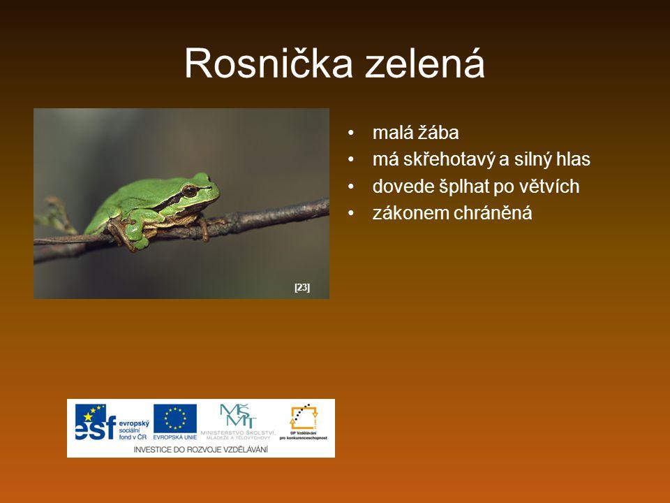 Rosnička zelená malá žába má skřehotavý a silný hlas dovede šplhat po větvích zákonem chráněná [23]