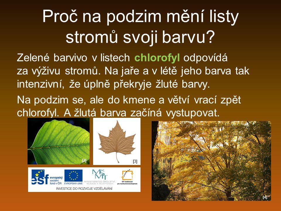 Proč na podzim mění listy stromů svoji barvu? Zelené barvivo v listech chlorofyl odpovídá za výživu stromů. Na jaře a v létě jeho barva tak intenzivní