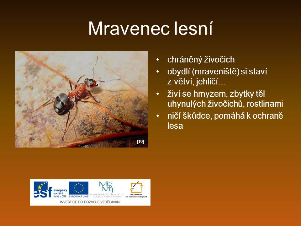 Mravenec lesní chráněný živočich obydlí (mraveniště) si staví z větví, jehličí… živí se hmyzem, zbytky těl uhynulých živočichů, rostlinami ničí škůdce