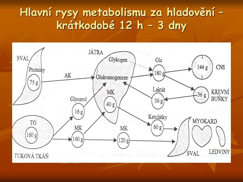 Hlavní rysy metabolismu za hladovění – krátkodobé 12 h – 3 dny