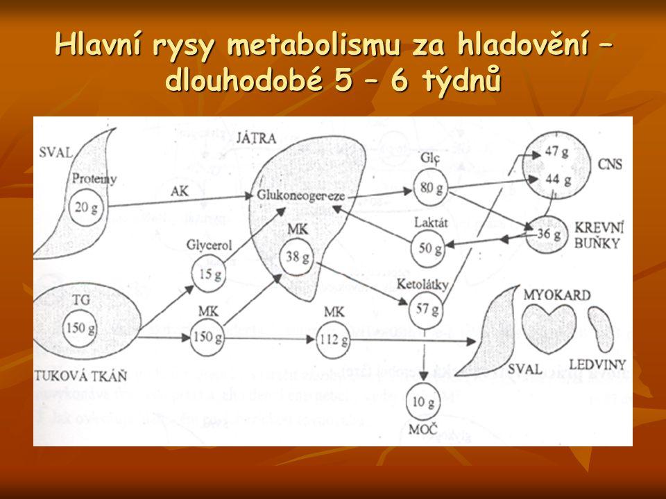 Hlavní rysy metabolismu za hladovění – dlouhodobé 5 – 6 týdnů