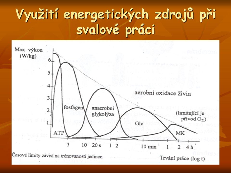 Využití energetických zdrojů při svalové práci