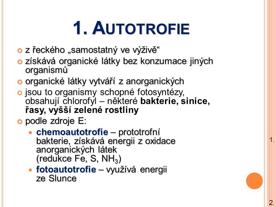 """1. A UTOTROFIE z řeckého """"samostatný ve výživě"""" získává organické látky bez konzumace jiných organismů organické látky vytváří z anorganických jsou to"""