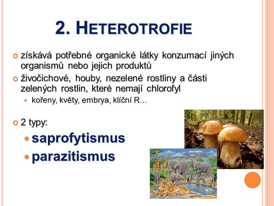 2. H ETEROTROFIE získává potřebné organické látky konzumací jiných organismů nebo jejich produktů živočichové, houby, nezelené rostliny a části zelený