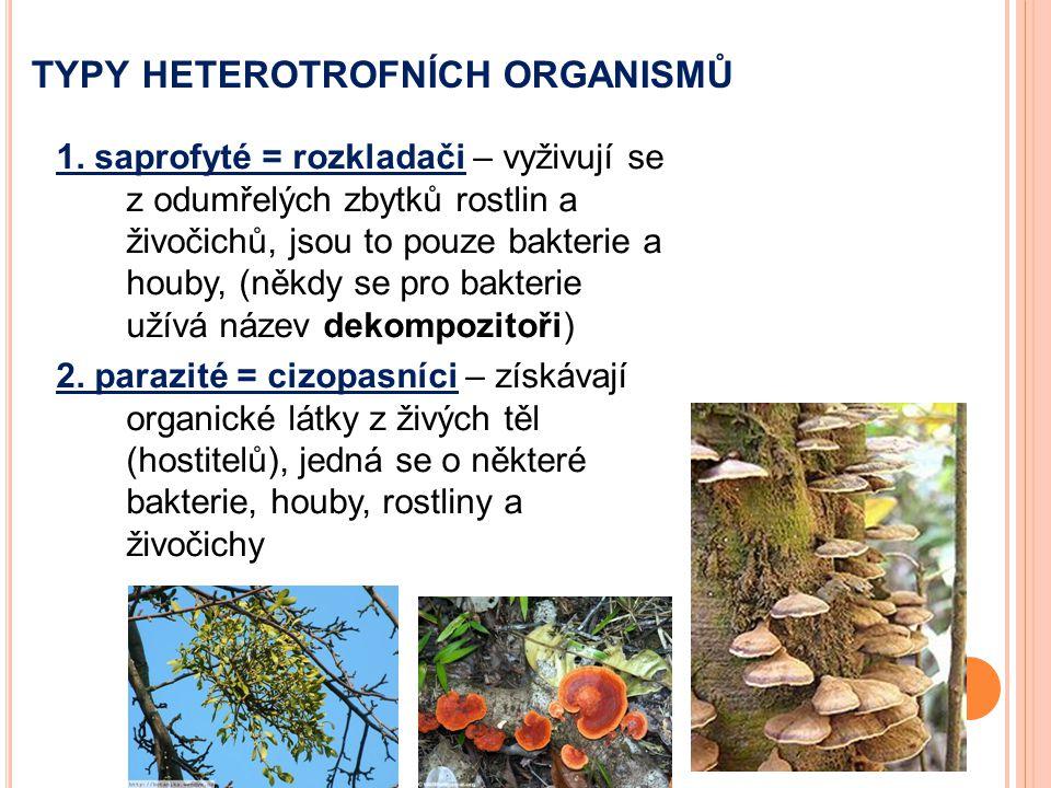 TYPY HETEROTROFNÍCH ORGANISMŮ 1. saprofyté = rozkladači – vyživují se z odumřelých zbytků rostlin a živočichů, jsou to pouze bakterie a houby, (někdy