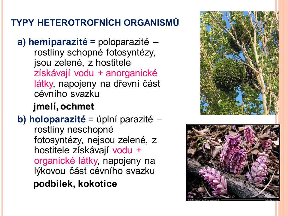 TYPY HETEROTROFNÍCH ORGANISMŮ a) hemiparazité = poloparazité – rostliny schopné fotosyntézy, jsou zelené, z hostitele získávají vodu + anorganické lát