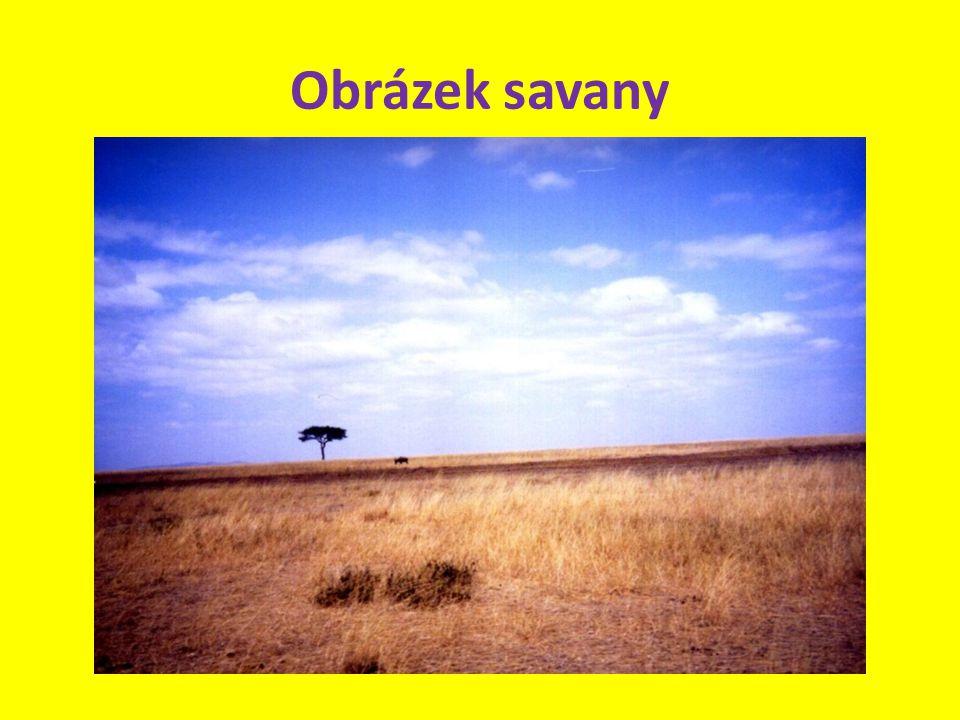 Obrázek savany