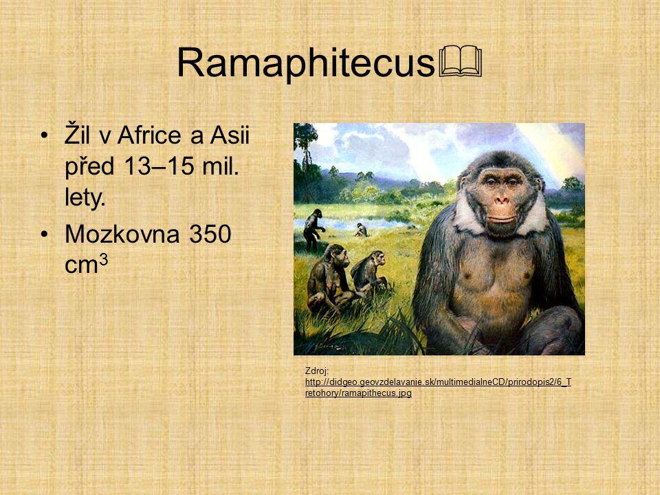 Vývojová linie rodu HOMO  RamaphitecusRamaphitecus – před 15 mil. lety Australophitecus africanusAustralophitecus africanus – 3 mil. let Homo habilis