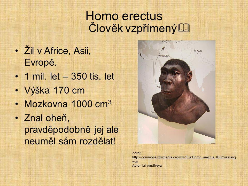 Homo habilis Člověk zručný  Člověk zručný První předchůdce člověka řazený do rodu Homo. Žil v Africe před 2,5 až 1,5 mil. lety. První kamenné nástroj