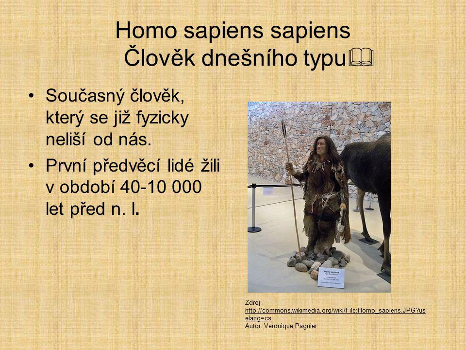 Homo sapiens neanderthalensis Člověk moudrý neandrtálský  Vymřeli jako slepá vývojová větev. Žili před 150 000–50 000 lety. Výška cca 160 cm Mohutný