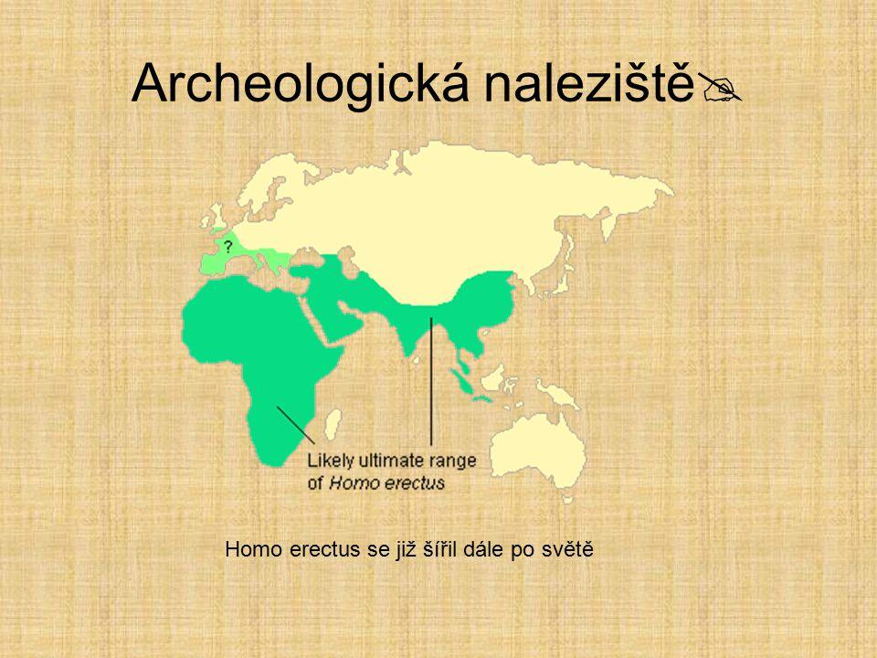 Homo habilis v Africe