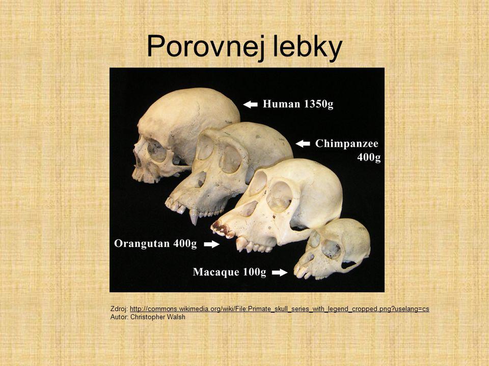 Porovnej lebky Zdroj: http://commons.wikimedia.org/wiki/File:Primate_skull_series_with_legend_cropped.png?uselang=cshttp://commons.wikimedia.org/wiki/File:Primate_skull_series_with_legend_cropped.png?uselang=cs Autor: Christopher Walsh