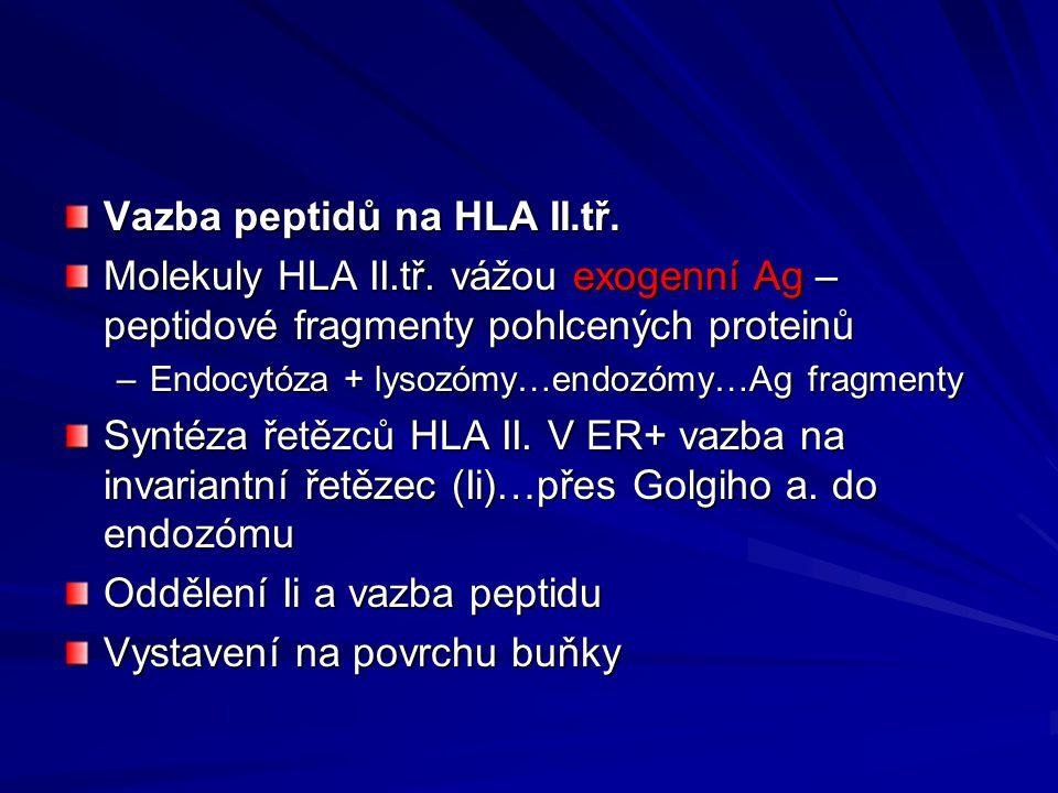 Vazba peptidů na HLA II.tř.Molekuly HLA II.tř.
