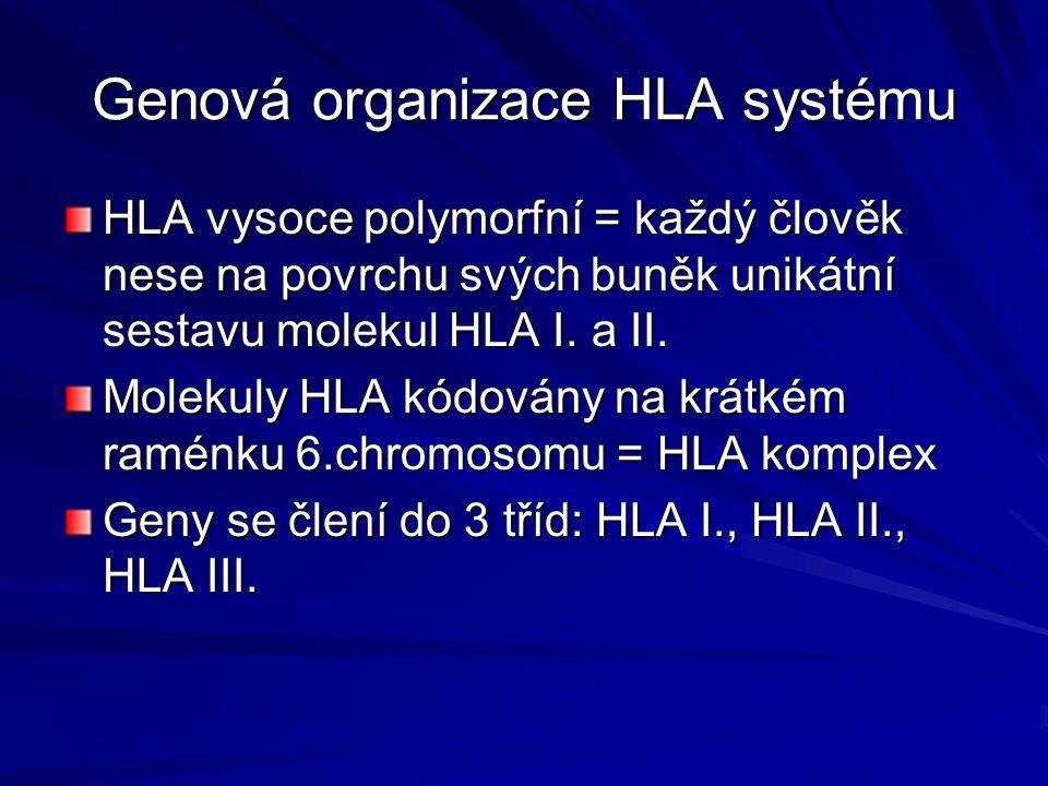 Genová organizace HLA systému HLA vysoce polymorfní = každý člověk nese na povrchu svých buněk unikátní sestavu molekul HLA I.