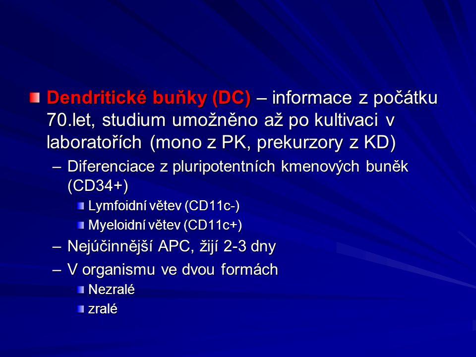 Dendritické buňky (DC) – informace z počátku 70.let, studium umožněno až po kultivaci v laboratořích (mono z PK, prekurzory z KD) –Diferenciace z pluripotentních kmenových buněk (CD34+) Lymfoidní větev (CD11c-) Myeloidní větev (CD11c+) –Nejúčinnější APC, žijí 2-3 dny –V organismu ve dvou formách Nezralézralé