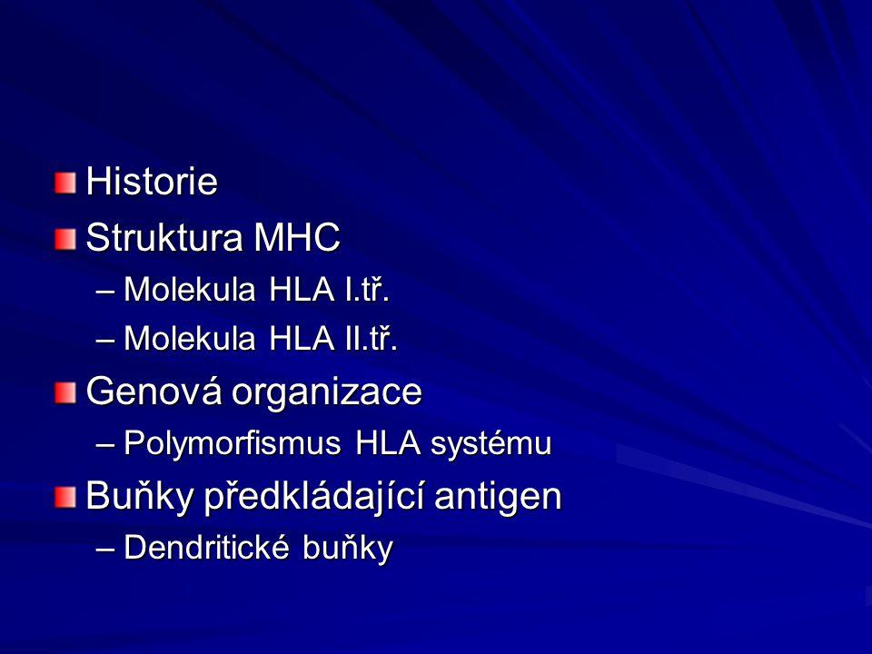 Historie Struktura MHC –Molekula HLA I.tř.–Molekula HLA II.tř.